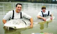 英国钓鱼者钓到3米长巨鱼(图)