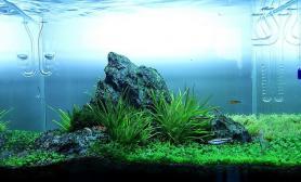 水草缸造景沉木水草泥化妆砂青龙石45CM及以下尺寸设计20
