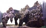 换个角度水草缸原来把石头立起来也可以造景