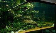 骷髅水草造景水草缸这货是用来养食人鱼的么水草缸慎入哦