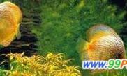 水草造景美化厅堂(图)