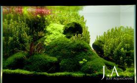 沉木青龙石水草造景60CM尺寸设计18