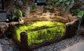 在这样的环境下玩水草水草缸简直太棒了