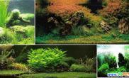 最完美水族造景系列之造景风格(三)(图)