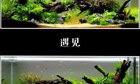 我的两个120CM沉木双面景水草缸请大家欣赏