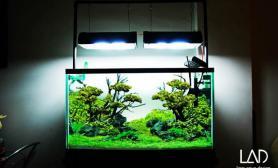 水草缸造景沉木蓝魔鱼青龙石90CM尺寸设计