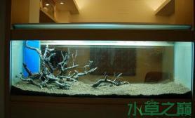 造景之旅不胜欣喜水草缸只有水草在改变鱼缸水族箱请欣赏……