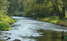 水族箱造景河流造景浅谈