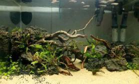 45缸一口水草缸简单的植物鱼缸水族箱