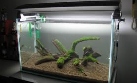 水草缸造景沉木水草泥化妆砂青龙石60CM尺寸设计02