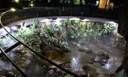 太逆天了水草缸这水陆缸做的都能泡温泉了吧