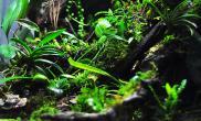 微雨林作品集锦雨林生态缸45CM超白缸