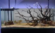 沉木青龙石原生态鱼缸06