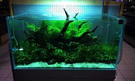 来看一看绿到惊艳的水草缸吧