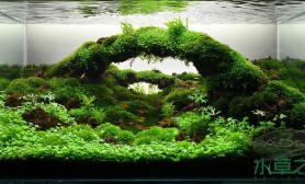 水草之巅迎新冬:水草缸中我喜欢的那个拱桥