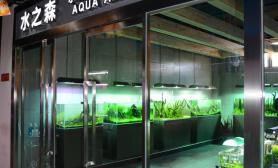 国内水族店水草缸造景北京尺寸设计水之森水景空间设计