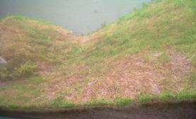 水族箱造景刚搜集几个国外草缸水草缸请欣赏(多图)
