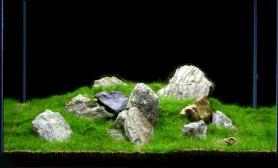 沉木青龙石水草造景90CM尺寸设计15