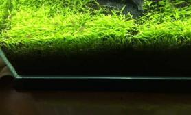 莫斯树水草缸发上来了鱼缸水族箱