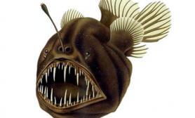 琵琶鱼的怪异之举