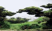 ADA2011前27名作品水草缸与君共赏(1-14)