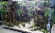 水草造景(60CM)杜鹃根妖精丛林森林作品