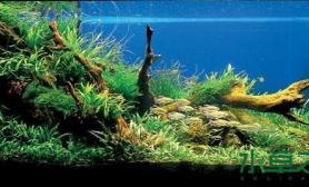 西非水草造景