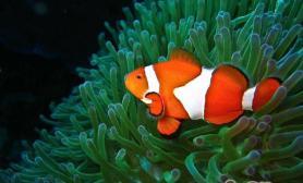 饲养热带鱼时的错误做法