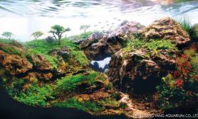 最逼真水草造景展(三)水草缸持续更新