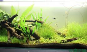 【水草造景篇】:梦开始的地方