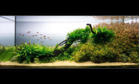 《沙岸》 2013  ADA712