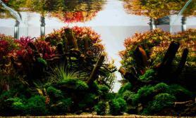 水草缸造景沉木水草泥化妆砂青龙石60CM尺寸设计53