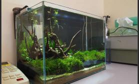 水草造景首次展览我的办公室小缸
