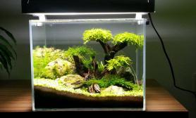 开缸3个月吸收大家的建议水草缸成景献上供大家评判沉木杜鹃根青龙石水草泥
