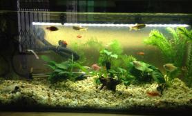 [原创]我的鱼缸70乘30,高60如何造景?谢谢!