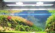 水草造景【龙巅水草第二届造景大赛】跨越自然山谷