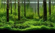 水族箱造景水草养分的添加