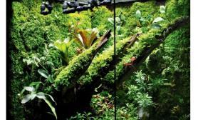 雨林水陆生态缸43
