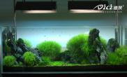 水草缸造景的设备要求