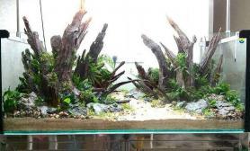 水草造景帮客人翻了个1图片3米缸