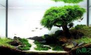 我的莫丝树----初期的水质稳定