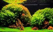沉木青龙石水草造景120CM尺寸设计25