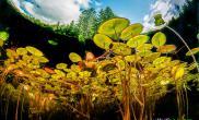 加拿大摄影师拍摄池塘中的世界