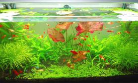 无CO2养殖水草-简单的水草简单的景