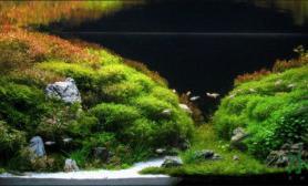 水草之巅迎新冬:水草缸的原生态