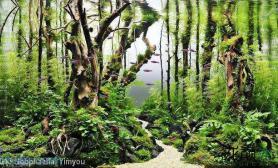 水族箱造景关于树的造景的多样式(之一)