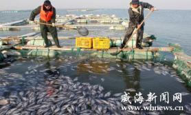 气温持续回升冰雪融化大量鱼儿被冻死(图)