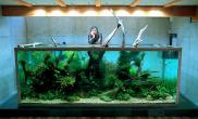 让人赞不绝口的水草造景鱼缸水族箱