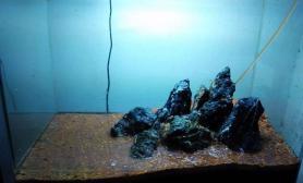 鱼缸造景元宵佳节夜,帮同事再开一海藻缸