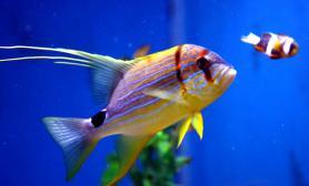 美丽的海水鱼